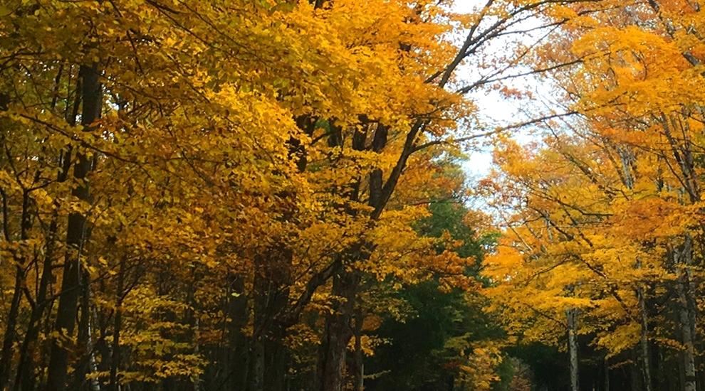 Algoma Wiisconsin In Fall Algoma Wisconsin